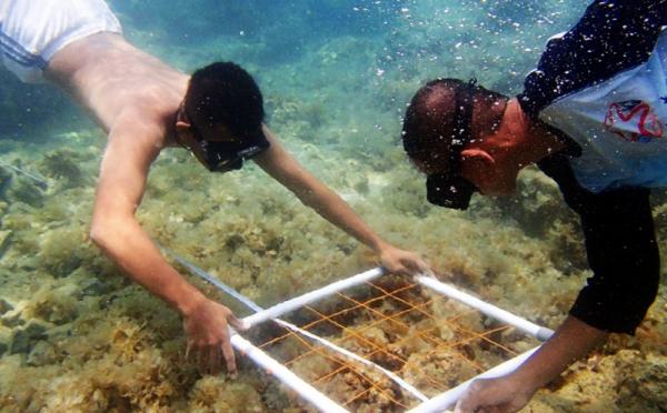 program Gerakan Cinta Laut