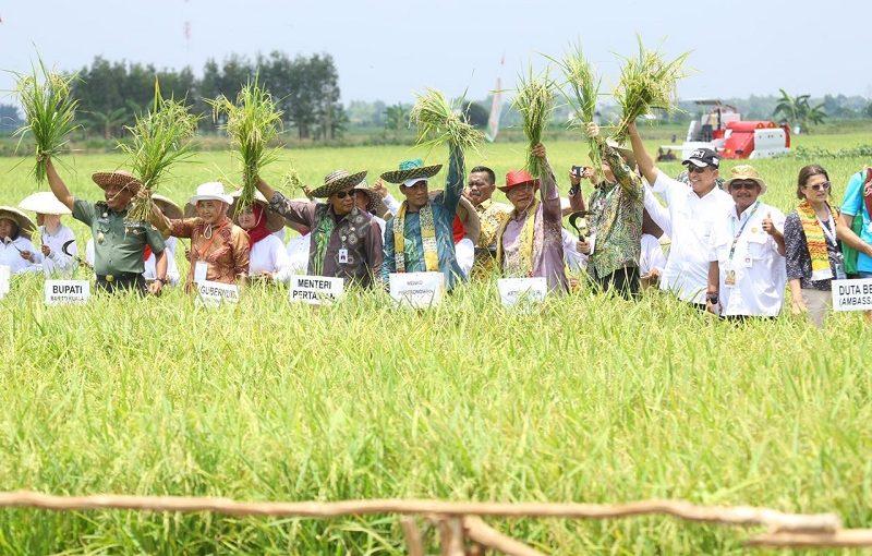 Hps Kalsel Fao Apresiasi Kementan Jadikan Rawa Masa Depan Pertanian