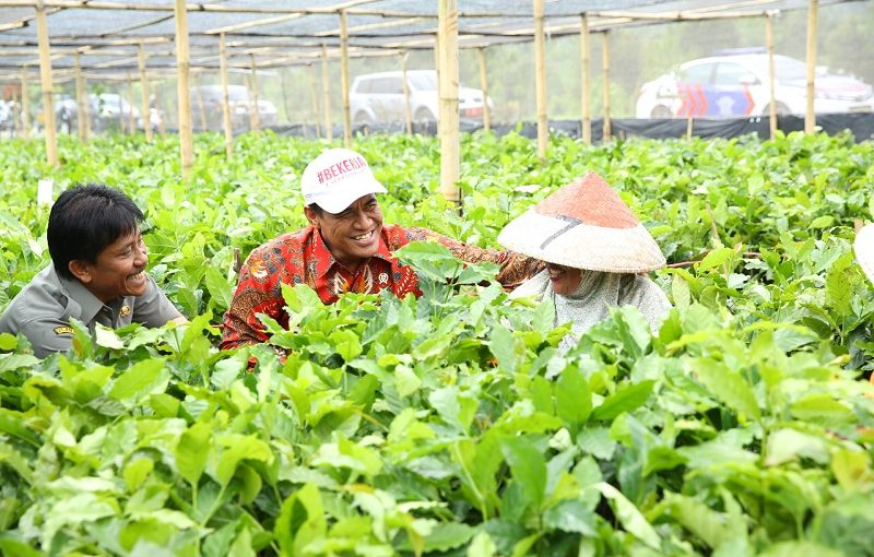 Sektor Pertanian Pimpin Penguatan Ihsg Independensi